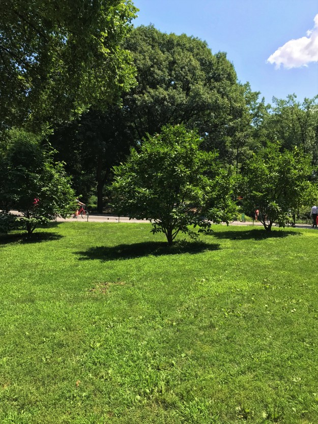 Central Park 12-38 p.m. 8-5-2018.JPG