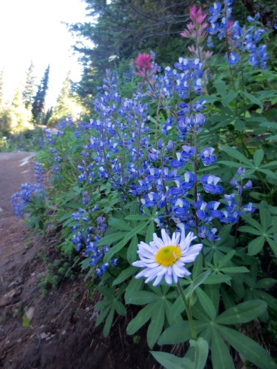 Wildflowers along the Naches Loop Trail