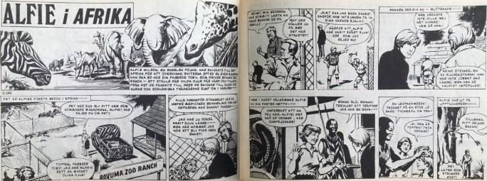 """Ett uppslag med Alfie i Afrika, som """"teaser"""" ur Veckans serier, nr 3, 1972. ©IPC"""