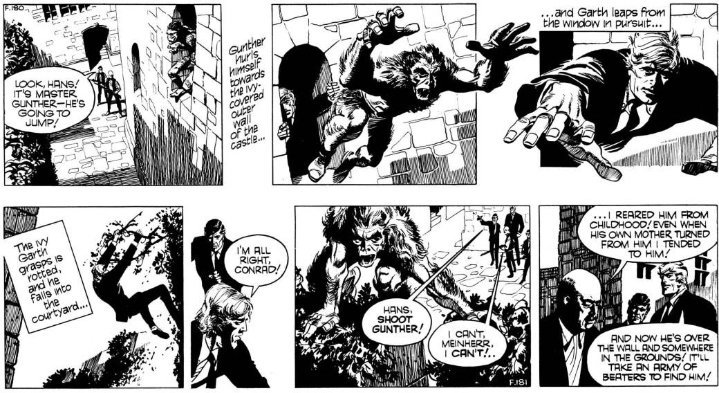 Två dagsstrippar ur den 71:e episoden med Garth, Wolf Man of Ausensee, av Jim Edgar (manus) och Frank Bellamy (teckningar), stripparna F180-181 (1972). ©Daily Mirror