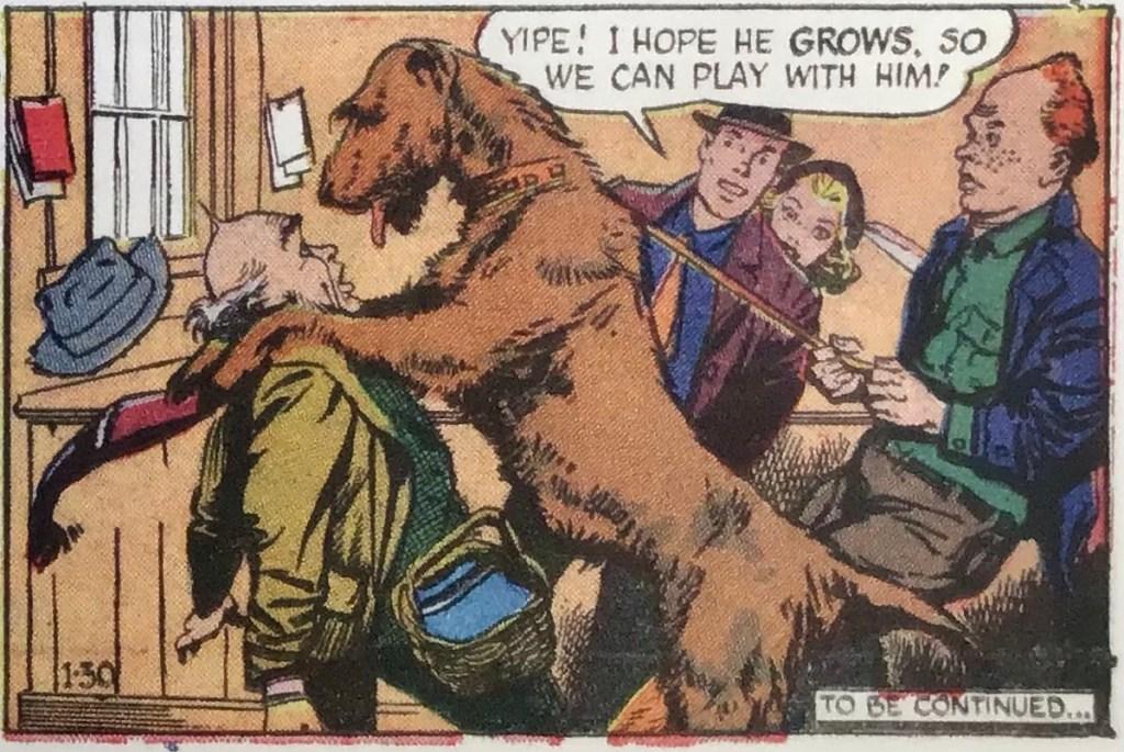 Stub blir något överraskad när han ska ta sig an en valp som en vän skickat till honom att ta hand om. En serieruta från 30 januari 1949. ©NEA/Picture This Press