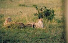 Kenya25