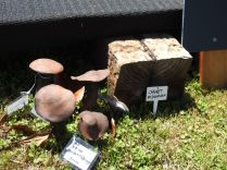 festival-of-pots-and-garden-art-otaki-jan-2017-0027
