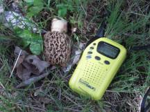 Teri find a first morel on April, 8 2017