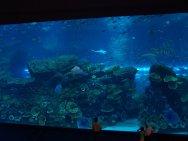 Dubai Aquarium has the largest viewing window of any aquarium in the world.