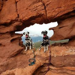 Hazzard and Random - the Dalmatians of Randomstravels posing in the Canyons of Utah in 2017, on one of their many road trips.