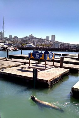 Pier 39 at a rare moment without any sea lions sun bathing on the docks at Fisherman's Wharf.