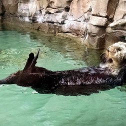 Roguetrippers are entertained by the sea otters at the aquarium.