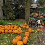 Take a day trip to the local pumpkin patch, like Strom's Farm in Guelph.