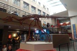 Dinosaur skeleton at the Buffalo Museum of Science