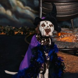 Danger-Mouse-Dalmatian-first-witch-pix-visit-Salem-Roguetrippers