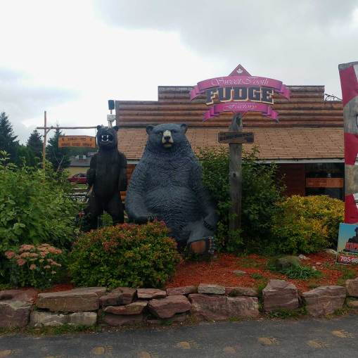 Bears-at-frontier-village-Sault-Ste-Marie