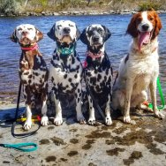 dogs-pf-randoms-travels-visit-callaghans-rapids