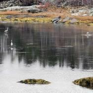 Waterfowl at the Salt Marsh Trail in Nova Scotia
