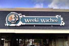 Welcome to Weeki Wachee Mermaid theatre