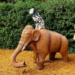 Pet Friendly travels - Hazzard the Dalmatian visits Dinosaur World Orlando day trips