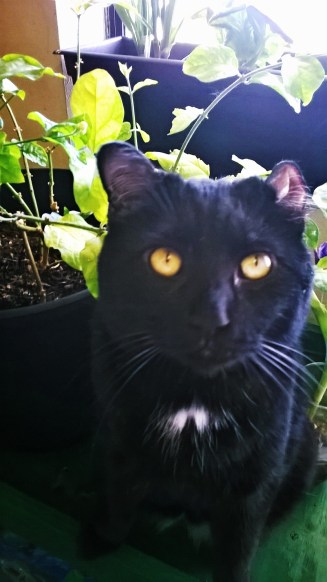 Oswin in his natural habitat, in my plants.