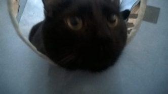 Blurry Oswin in his cube.