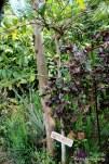 Coffee arabica plantations