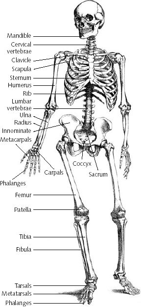 rohlenscience / Human Body Resources