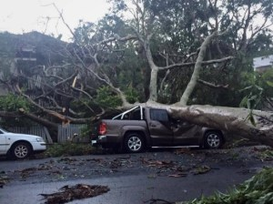 Photo of UTE crushed by tree