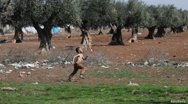 Agricultores de Afrin acusan a las milicias pro-turcas de incautar y tasar los cultivos de olivos