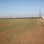 kobane liberada frontera 2