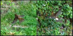 Sparrow doin' the buggerin' off.