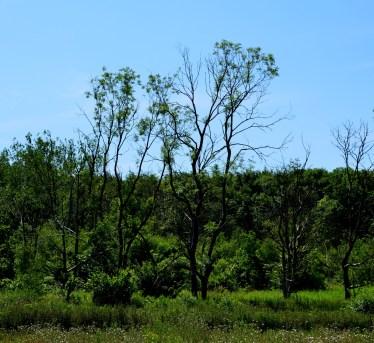 Woods across rail line from Fan Field Farm