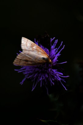 Small moth on small flower.