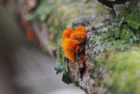 Fungus (Brain?)