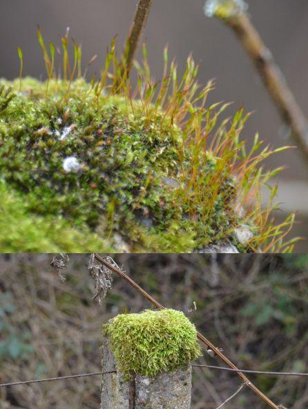 Moss on concrete posts