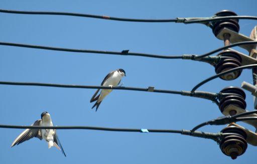 Birds n the wire