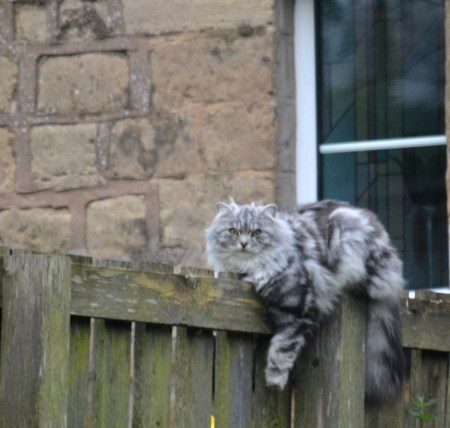 """Cat relaxing at Albert's Dock - """"Oliver"""" apparently."""