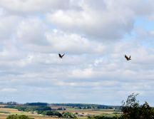 A pair of skylarks doin' the buggerin' off