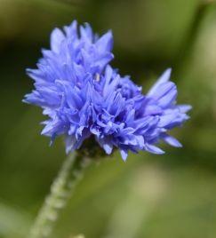 15 0603 144Cornflower blue