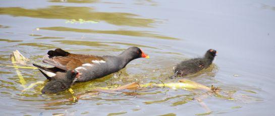 Family squabble