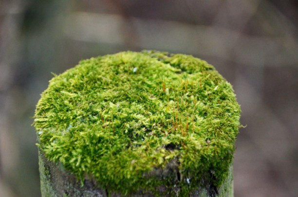 Fence post with moss