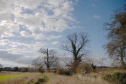 Sky, trees & a hahaLong Lake