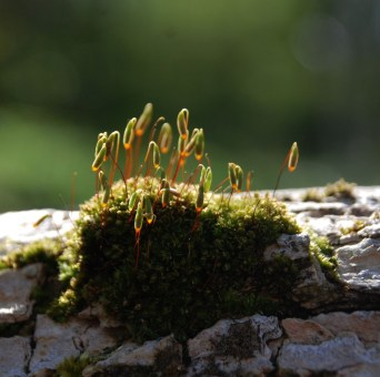 Moss on elder