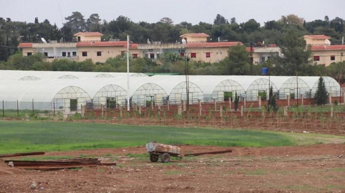 Un projet de culture sous serre lancé au nord-est de la Syrie permet d'approvisionner en légumes près de 450 000 habitants de la région.