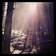 Light among trees