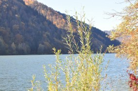 HERBST_Roland Wegerer_Along the Danube_16