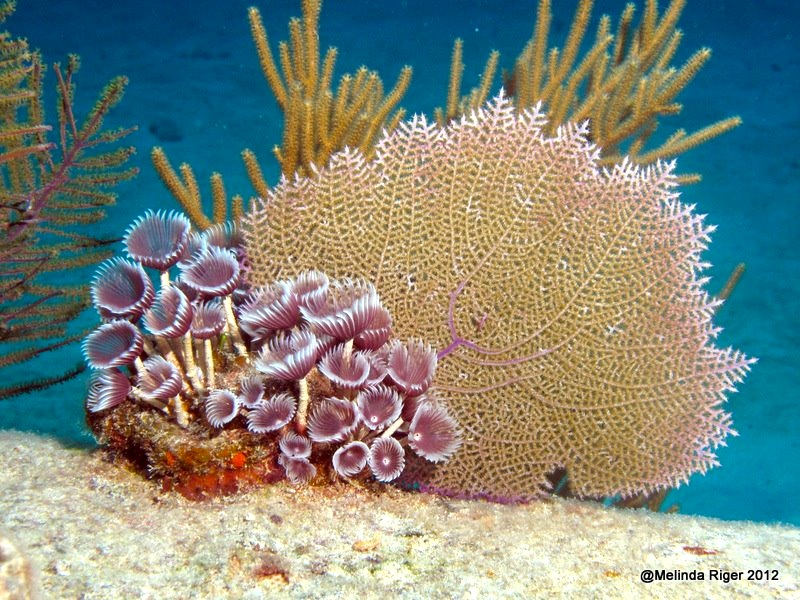 abaco barrier reef rolling
