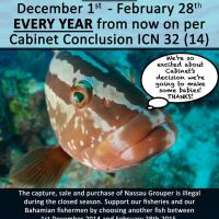 NASSAU GROUPER: VULNERABLE, ENDANGERED… & NOW PROTECTED