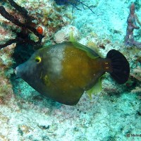 WTF? (WHAT'S THAT FISH) (5): THE FILEFISH