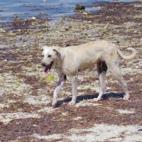 WATER DOGS: THE POTCAKES OF SANDY POINT, ABACO