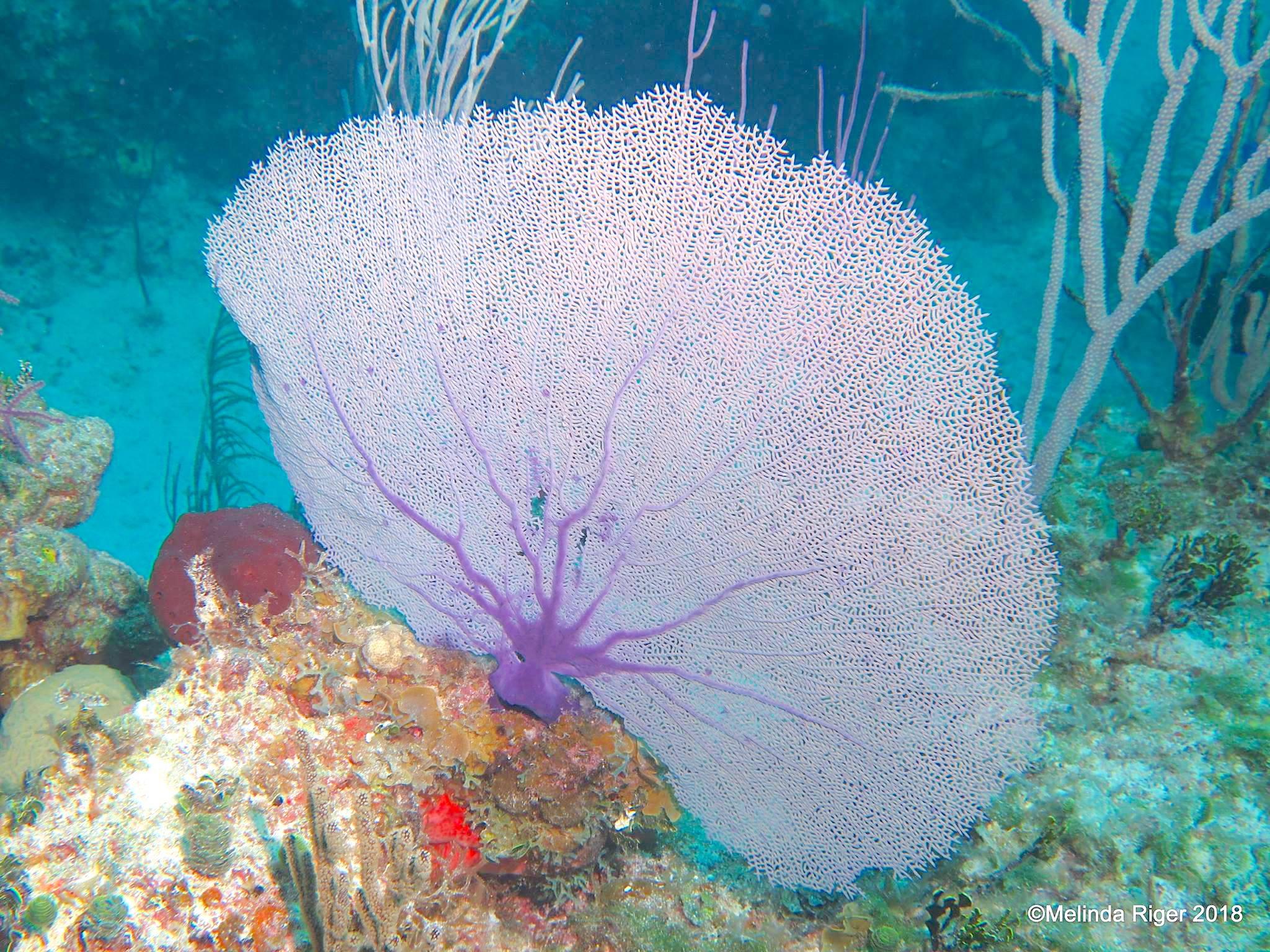 floral coral reef gardens