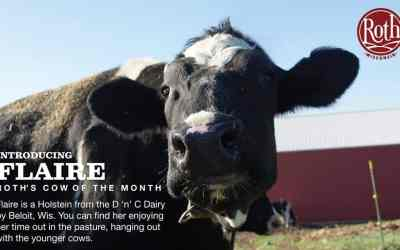 January Cow of The Month