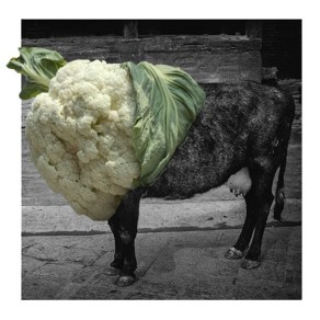 The Phatcowlee logo is an image of a cow Shrestha superimposed with a photo of a cauliflower. Photo: Courtesy of the artist